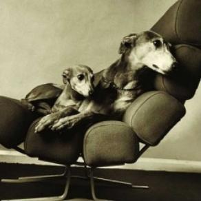 Čestitka - Dogs In A Chair